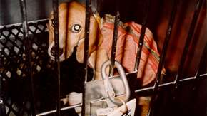 VIVISECTION_FEB03_MAIN.jpg