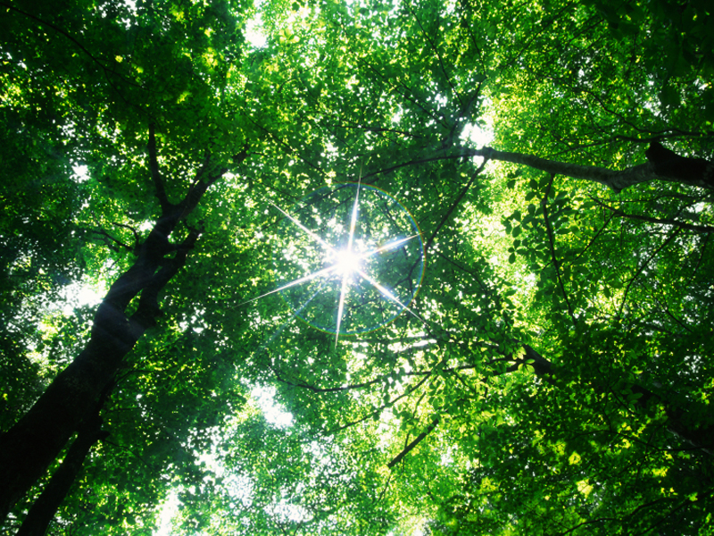 Sunlight pierces through a dense green canopy