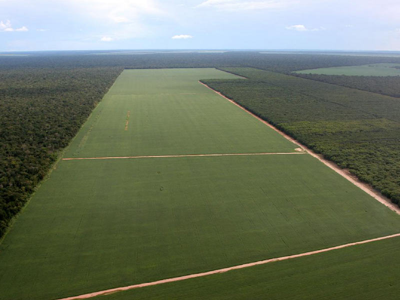 Soya fields cut through rainforest