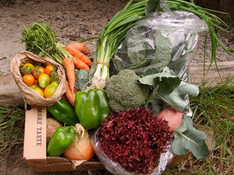 A gorgeous organic vegetable box from the Miller family farm. Photo: Alicia Miller.