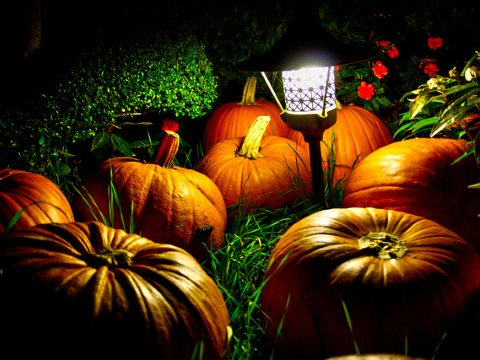 Glowing pumpkins of the night, our to eat, not just to fright. Photo: Andrea Verganic via Flickr.