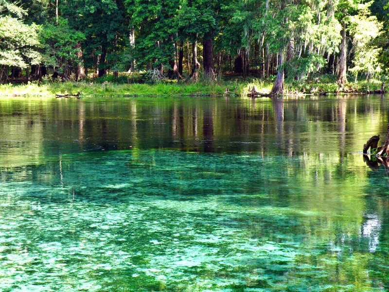 Devil's Springs in the Florida Everglades, where a deep crevice leads to submerged caverns. Photo: Phil's 1stPix via Flickr (CC BY-NC-SA).