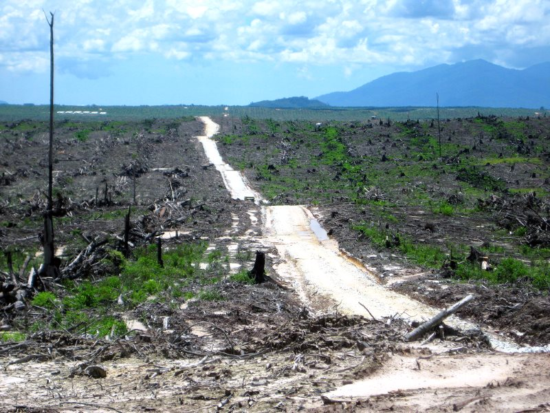 Once a rainforest ... land cleared for a palm oil plantation, Indonesia. Photo: Rainforest Action Network via Flickr (CC BY-NC).