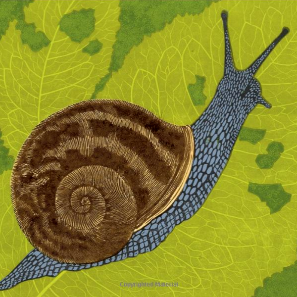 From front cover of 'Slugs and Snails by Robert Cameron, published by Harper Collins.
