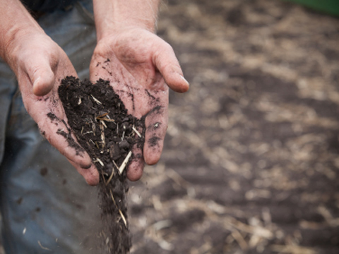 Rich dark soil pouring from hands