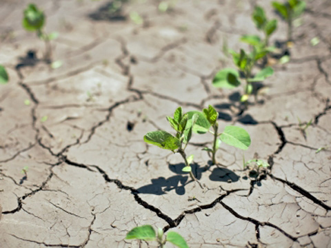Seedlings growing in drought-cracked ground