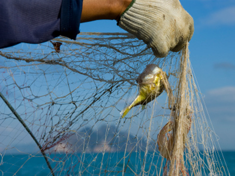 Bycatch