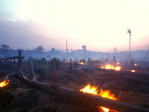 Amazon rainforest being burnt