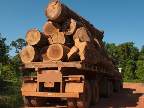 Illegal timber
