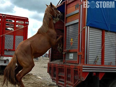 US horsemeat trade
