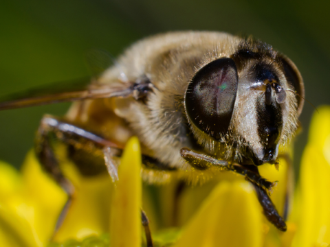 Bee on flower. Photo: dslaven / Shutterstock.com.