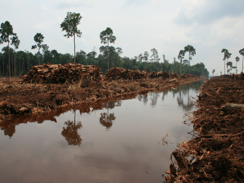 Deforestation in Indonesia. Photo: Rainforest Action Network.