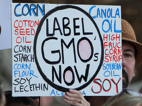 Rally to Support GMO food labeling at Connecticut State Capitol, 21st May 2013. Photo: CT Senate Democrats via Flickr.com.