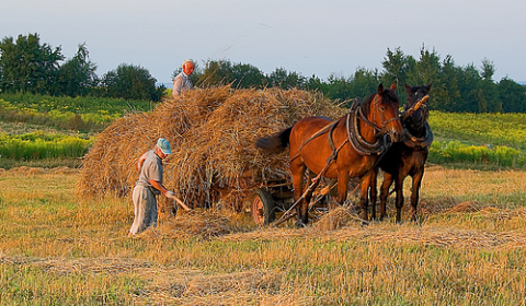 Polish farmers hard at work gathering in the hay crop. Photo: Hejma via Flickr.com.