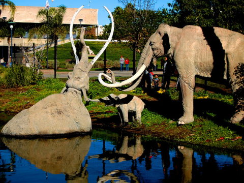 A family of Columbian Mammoths at the La Brea Tarpits Zoo (Pliocene section). Photo: Steve Rawley via Flickr.com.