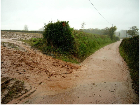 Trees and hedgerows mean less run-off and erosion, reducing flooding and siltation downstream. Photo: Coed Cymru - coedcymru.org.uk/ .