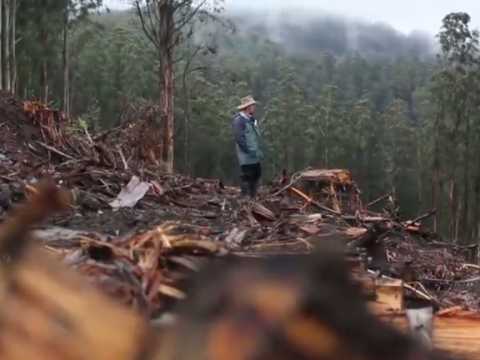 A clear-felled area of Mountain Ash, with David Lindenmayer.