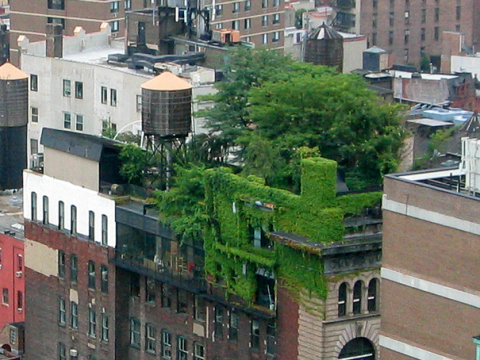 Green growth in lower Manhattan - but is it enough? Photo: Alyson Hurt via Flickr.com.