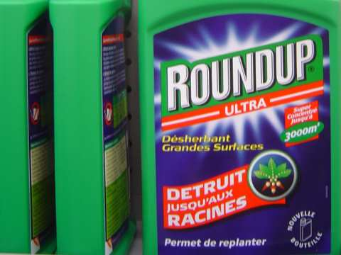 Roundup Ultra destroys down to the roots. That's not to mention what glyphosate, the main active ingredient of Roundup, does to our health. Photo: David Reverchon via Flickr.com