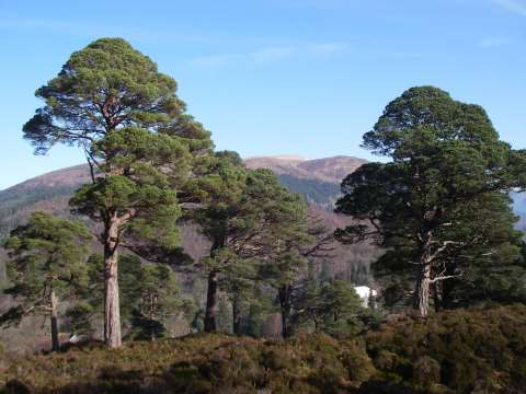 Looking north over Achnacarry and Torr a Mhuilt. Photo: Arkaig Community Forest.