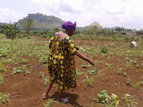 Small farmers - like Ndomi Magareth, planting beans here on her land in Cameroon - 'are losing land at a tremendous rate. It's a land reform movement in reverse', says GRAIN's Henk Hobbelink. Credit: Monde Kingsley Nfor/IPS