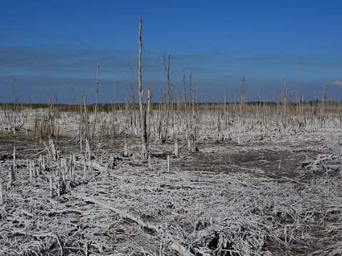 Who drank all the water? Dried out 'swamp' just NE of the Everglades National Park, Miami County, Florida. Photo: A Duarte via Flickr.