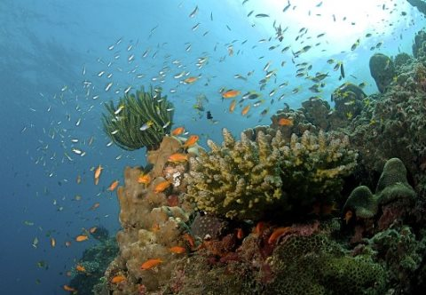Reef stricken: corals, fisheries and tourism will all be damaged by ocean acidification. Photo: coral reef on the Andaman Islands by Ritiks via Wikimedia Commons.