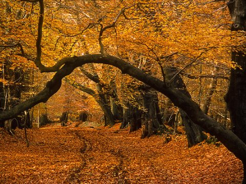 Could this ancient woodland be 'offset'? Or better still, transformed into a new asset class for speculative investment? Ashridge Forest, Hertfordshire, England in the late autumn. Photo: ukgardenphotos via Flickr.