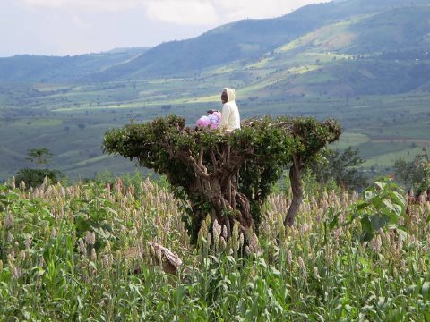 A small farmer keeps watch over his crops from a treetop south of Arba Minch, Ethiopia. But what will he do when multinational corporations, backed by the full force of law, enter the valley? Photo: David Stanley via Flickr.