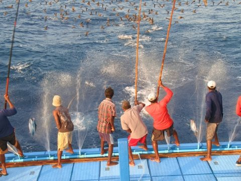 Rod and line fishing for tuna on a Maldivian fishing boat. Photo: Canopus Maldives / '...your local connection' via Flickr.