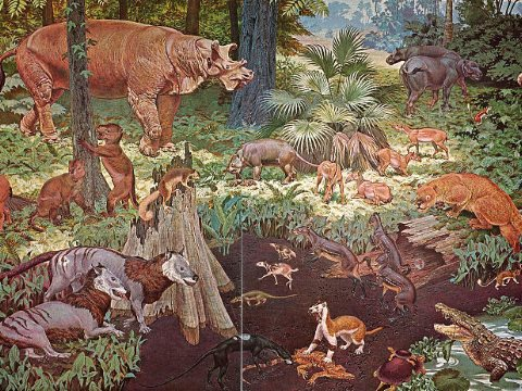 Eocene fauna of North America, on a 1964 mural made for the US government-owned Smithsonian Museum. Photo: Jay Matternes / Wikimedia Commons.