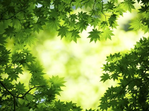 The future is bright - the future is Green. Image: 'Green tree' by livewallpapers.org.