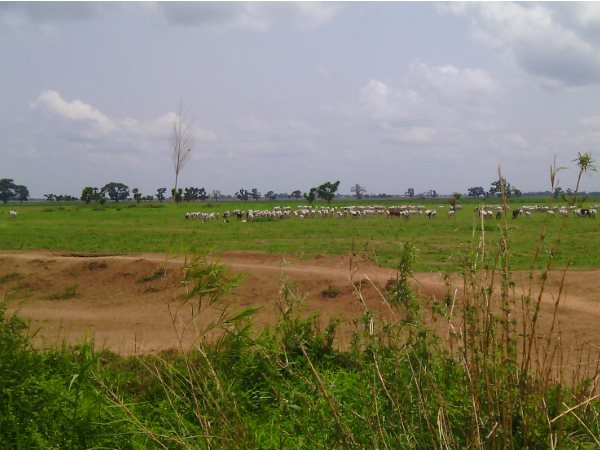 Lands of the Gassol community allocated to Dominion Farms, showing the link road constructed by UBRBDA and the community's use of the lands for grazing. Photo: Centre for Environmental Education and Development.