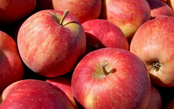 These apples at Eberly's Orchard near North Liberty, Indiana are non-GMO - but look just like the GMO Arctic apple. In future, how will you know? Photo: Tom Gill via Flickr (CC BY-NC-ND 2.0).