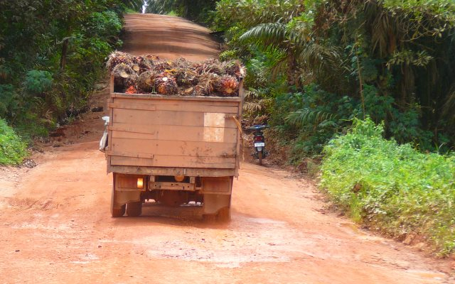 A truck carries palm fruit for processing from a rainforest plantation in Indonesia. Photo: Rainforest Action Network via Flickr (CC BY-NC).