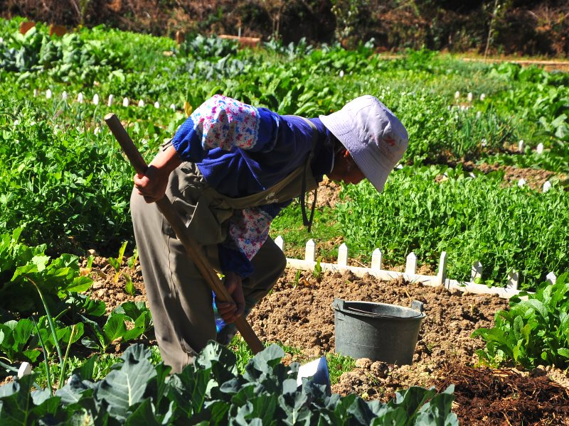 This small cultivator of fresh vegetables in China is probably practising agroecology already! Photo: Jing via Flickr (CC BY-NC-ND).