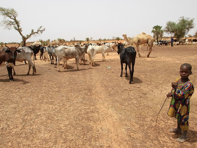 A boy herding cattle near Mentao refugee camp in Burkina Faso. More than 18 million people in West Africa's Sahel region are hungry and malnourishedas a result of the crisis. Photo: DFATD | MAECD via Flickr (CC BY-NC-ND).