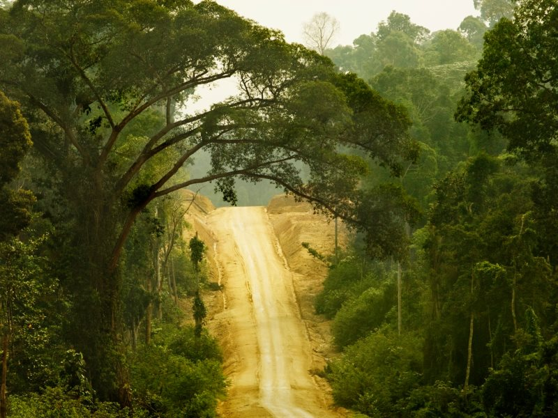 A legally questionable logging corridor built by Asia Pulp and Paper inside the traditional home of the Orang Rimba, one of Indonesia's last nomadic cultures. Jambi Province, Sumatra, Indonesia. Photo: Rainforest Action Network via Flickr (CC BY-NC).