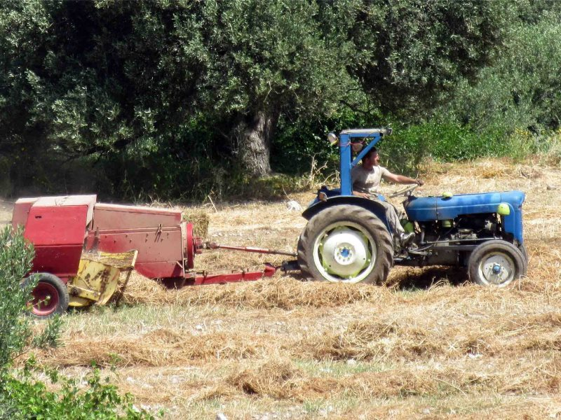 Make hay while the sun shines! This farmer in Cyprus can remain GMO-free - for now. Photo: Tony Woods via Flickr (CC BY-ND).