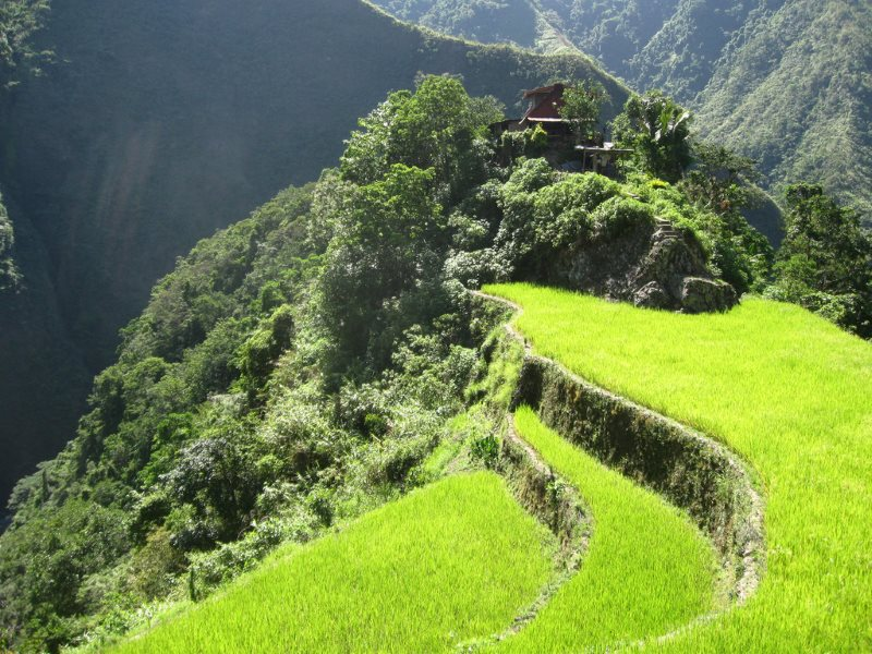Agroecology in action: rice farm in Batad, the Philippines. Photo: Joe Coyle via Flickr (CC BY-NC).