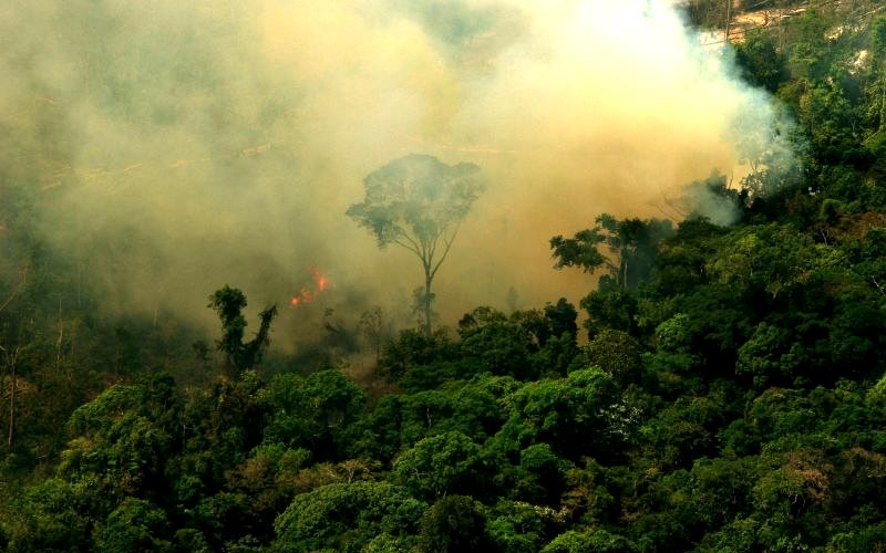 Burning forest in the Amazon at Flona do Jamanxim. Novo Progresso, Pará, Brazil. Photo: Leonardo F. Freitas via Flickr (CC BY-NC-SA).