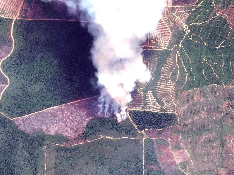 Fire in Tesso Nilo National Park, Sumatra, Indonesia, on 5th July 2015 - made available through a partnership of Global Forest Watch Fires and Digital Globe. Photo: World Resources Institute via Flickr (CC BY-NC-SA).