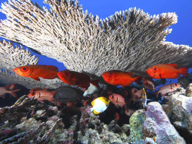 No shortage of biodiversity here - Rapture Reef sits within the Northwestern Hawaiian Islands Marine National Monument. The monument encompasses more than 140,000 square miles of ocean and coral reef habitat. Photo: NOAA's National Ocean Service via Flick