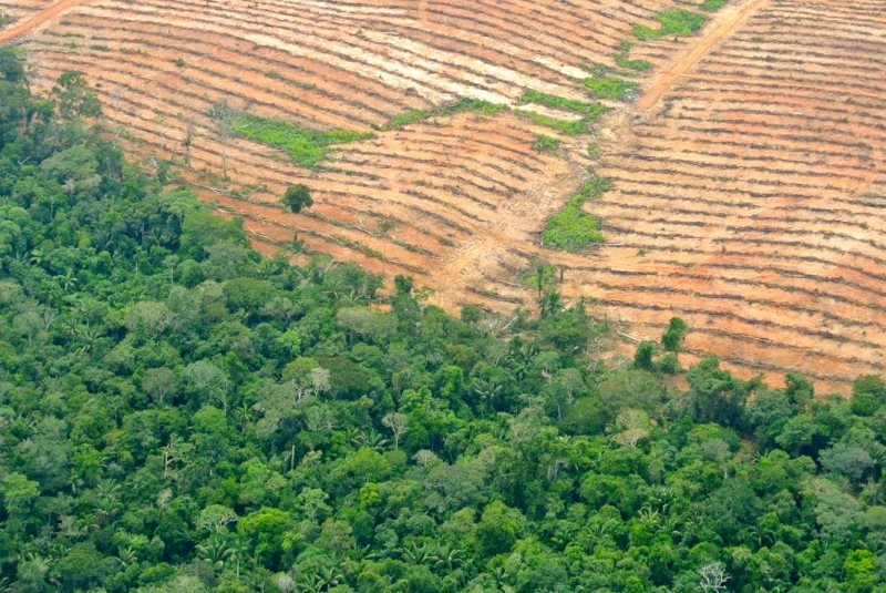 Melka group oil palm plantations near Pucallpa, Peru, cutting deep into primary rainforest, April 2014. Photo: Rainforest Rescue via FPP.