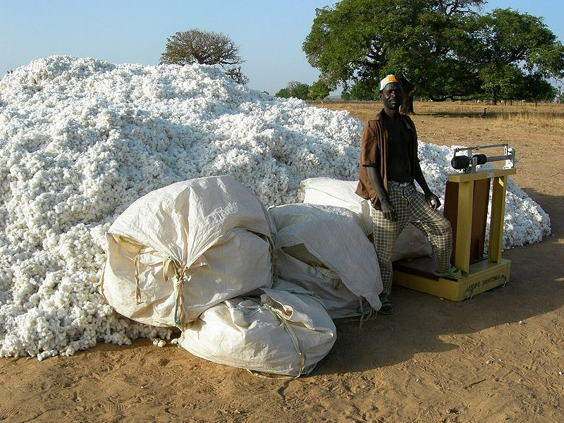 Burkina Faso farmers were happy with Monsanto's GMO Bt cotton, which raised their profits. But for the companies that bought the cotton at a fixed price set by the government, it was a disaster, thanks to the shorter fibres and lower yields. Photo: KKB vi