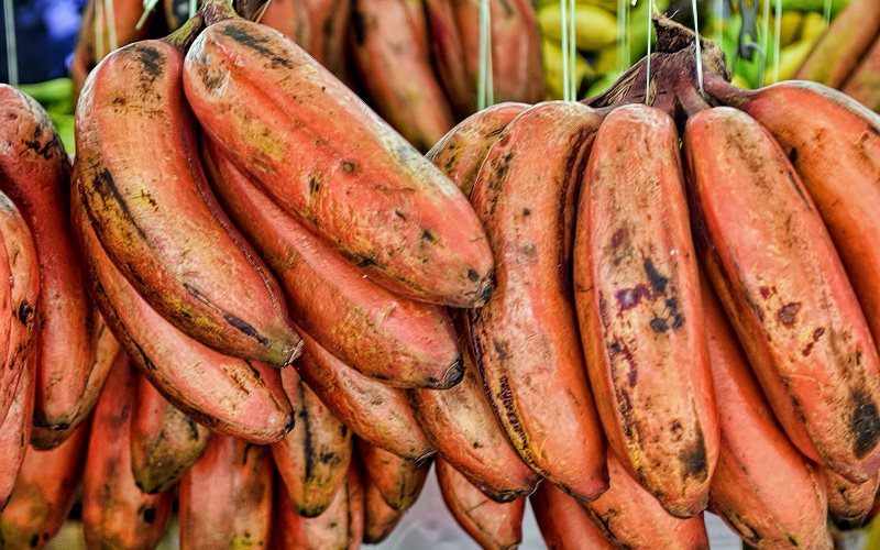 These red bananas are naturally red and high in beta carotene. So why the need to develop a patented GM banana that does the same job? Photo: Choo Yut Shing via Flickr (CC BY-NC-SA).