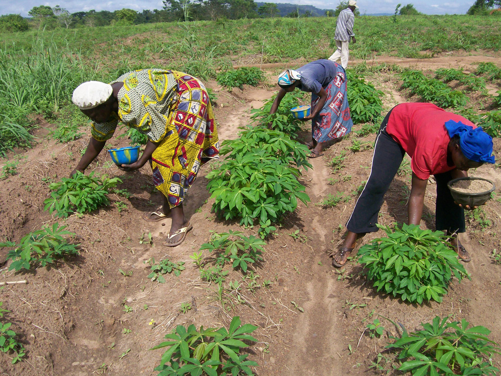 Women applying fertilizer to Cassava plants in Ekiti, without these crops the farmers would have nothing. Photo: International Institute of Tropical Agriculture via Flickr (CC BY-NC 2.0)