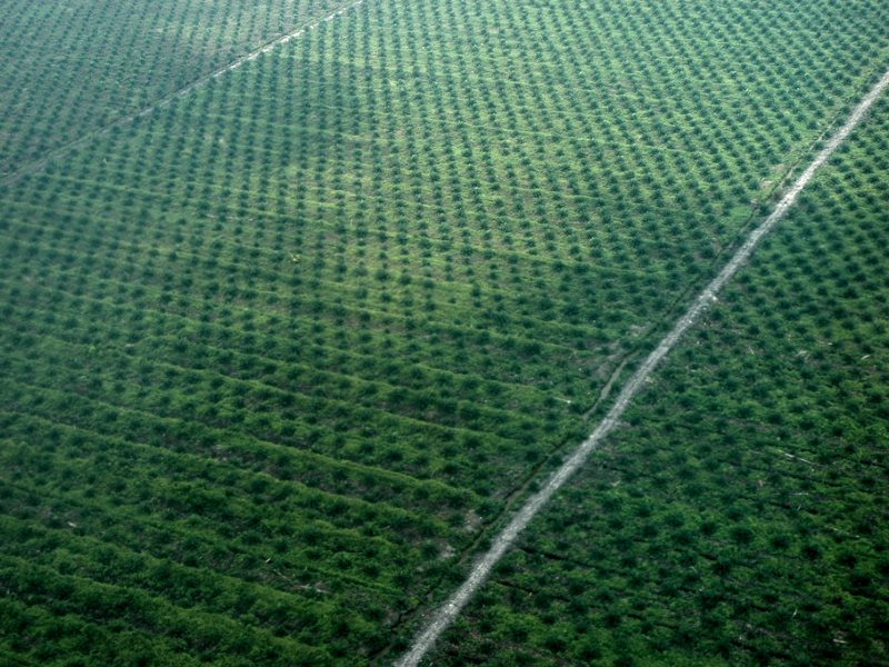 Oil palm plantation in Central Kalimantan. Photo: Klima- og miljødepartementet via Flickr (CC BY-NC-ND).