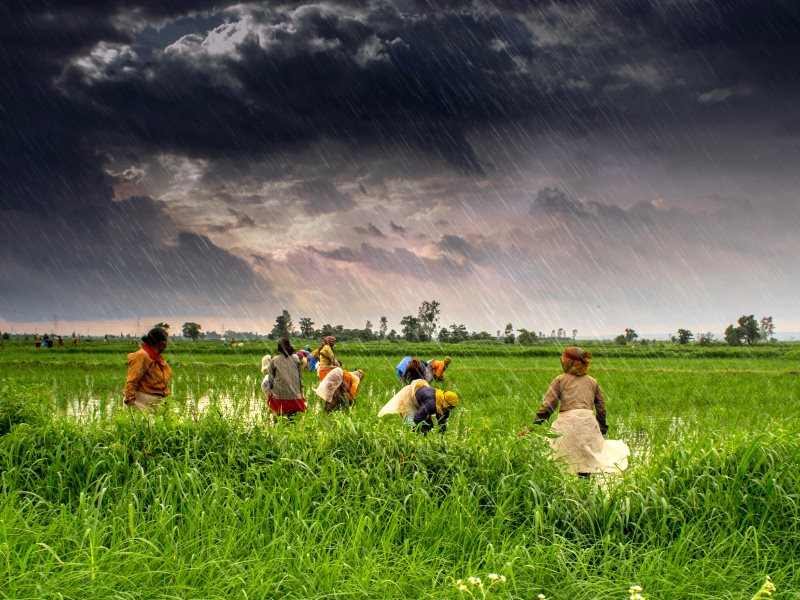 Farmers on the storm ... Madhya Pradesh, 31st July 2013. Photo: Rajarshi MITRA via Flickr (CC BY).