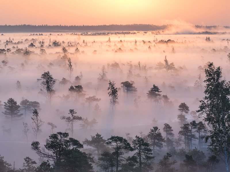 September sun rising over foggy wetlands, Ķemeri National Park, Latvia - part of the 'Natura 2000' territory designated under EU nature laws for its biological diversity, the unique Ķemeri Moorland, various ecosystems, and springs of mineral and curativ